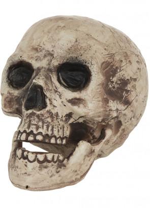 Skull Prop (Human)