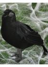 Feather Crow / Raven Halloween Prop 20cm