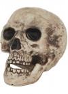 Skull Prop - Human - 22cm